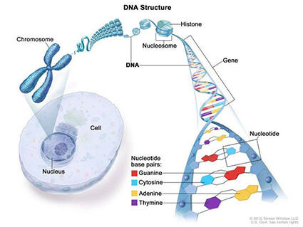 cancer from genetic)