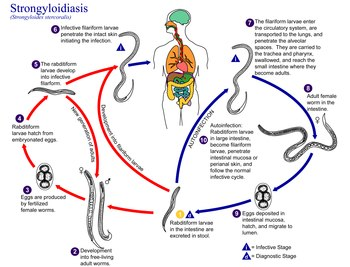 helminth infection sepsis