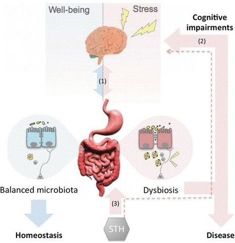 Helminths Hercules - Helminth infection microbiota