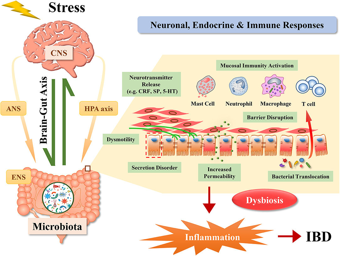 RomJOH - Page 47 Dysbiosis disease