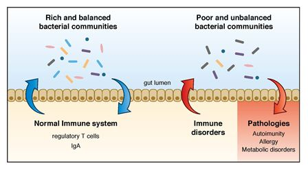dysbiosis and leaky gut