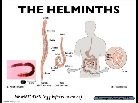 What does the root helminth mean, Încărcat de