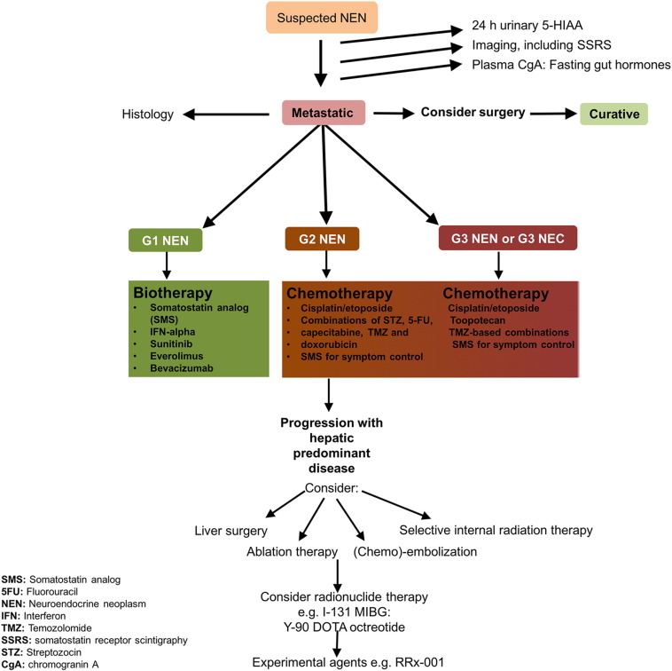 Neuroendocrine Tumors: Review of Pathology, Molecular and Therapeutic Advances