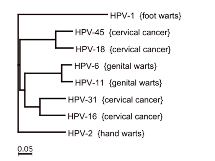 does hpv that causes cancer cause warts