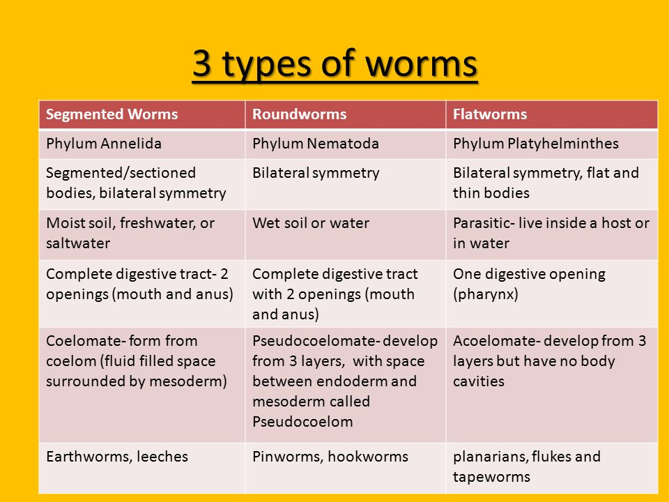 nematode ppt phylum platyhelminthes)