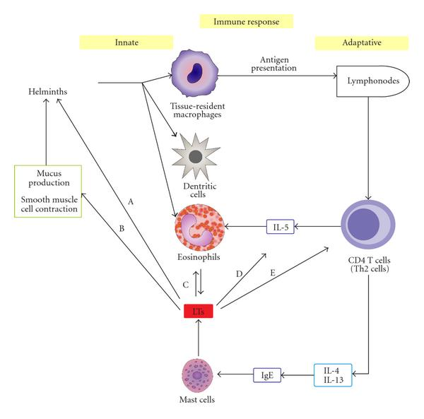 immunity to helminth infections)