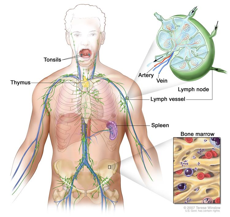 cancer hodgkin s lymphoma survival rate)
