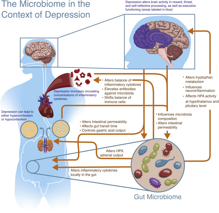 Dysbiosis and depression.