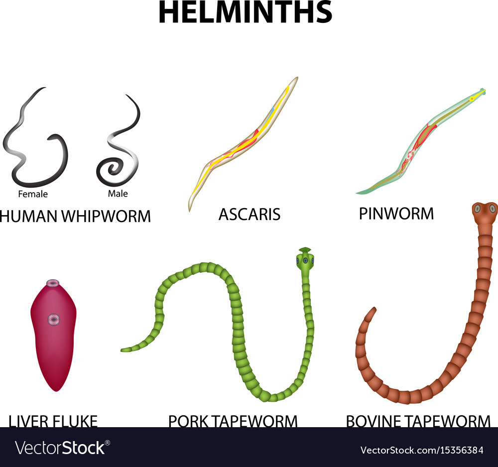 helminth roundworms)