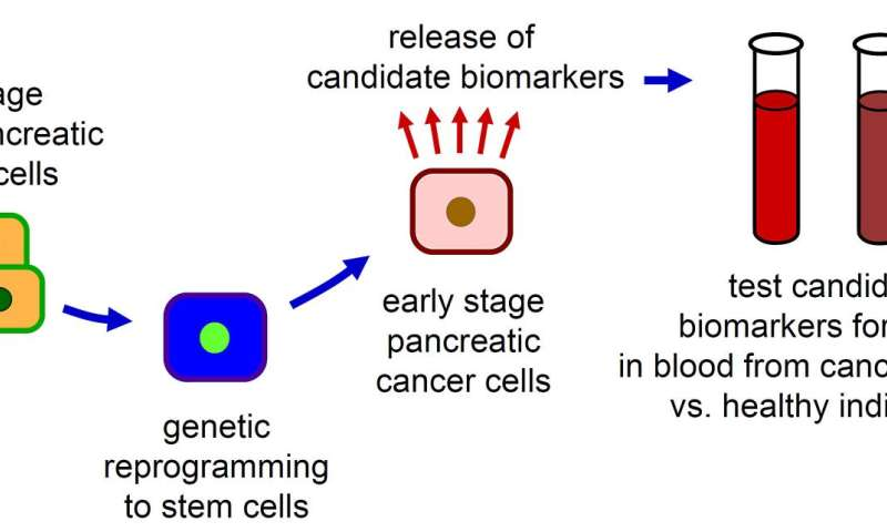 Novel Biomarkers in Pancreatic Cancer