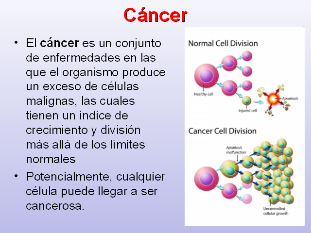 cancer que es mitosis)