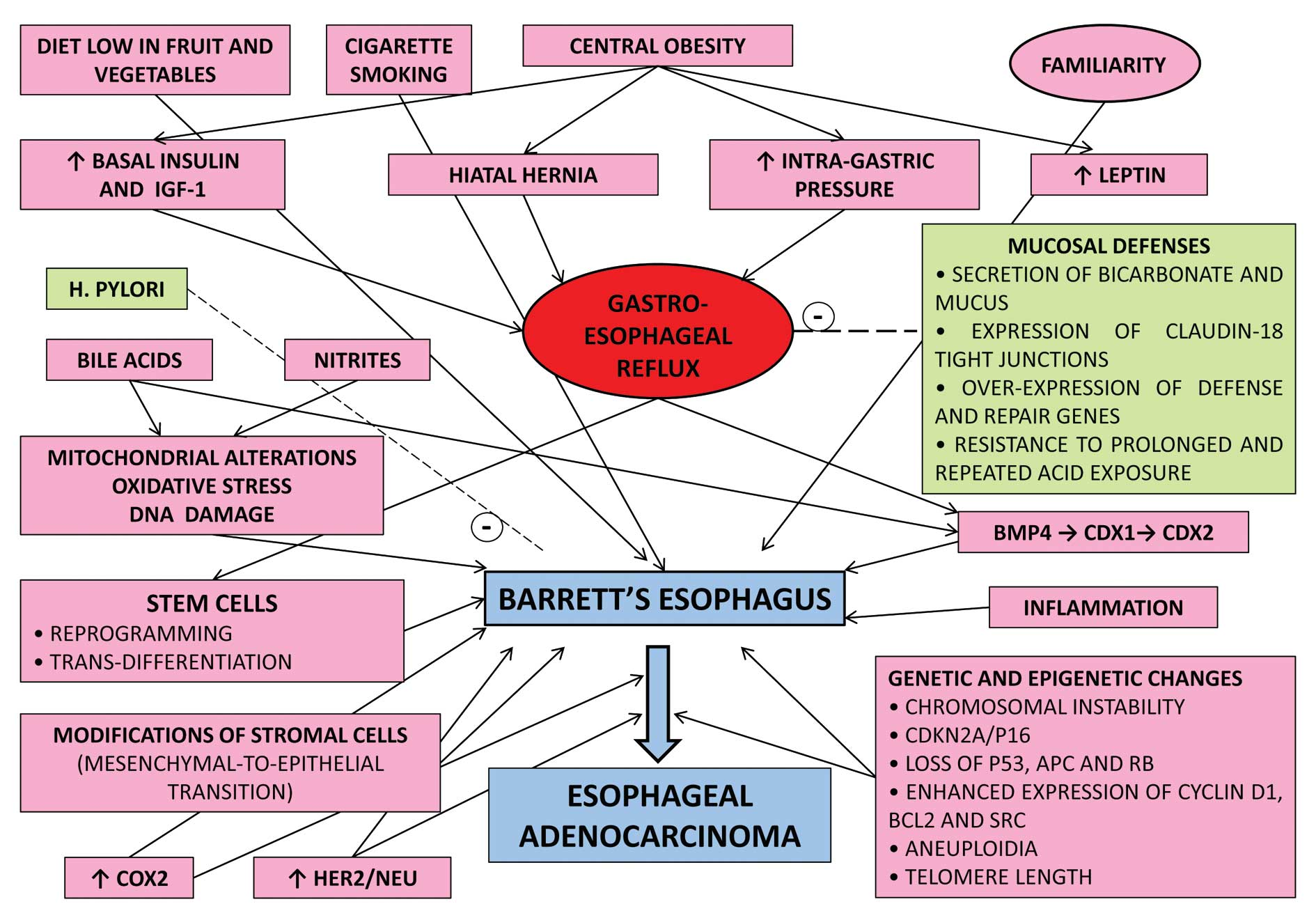esophageal cancer genetic predisposition)