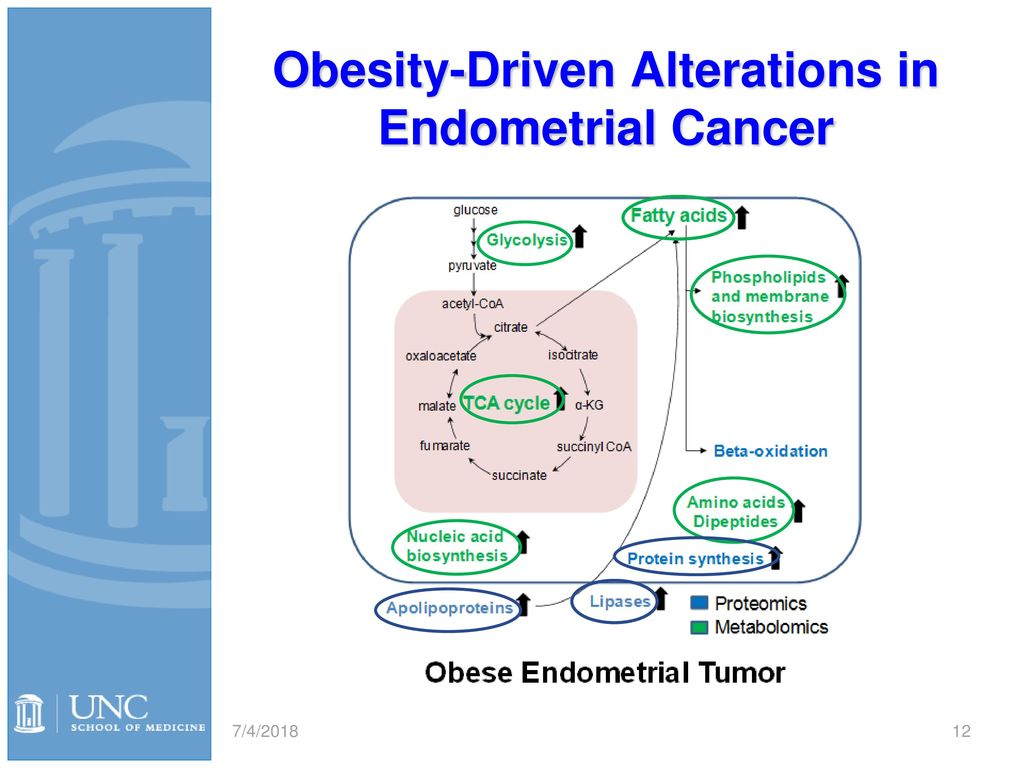 endometrial cancer obesity)
