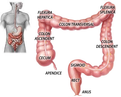 cancer colon descendent simptome)