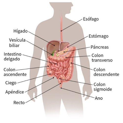 cancer de colon dolor