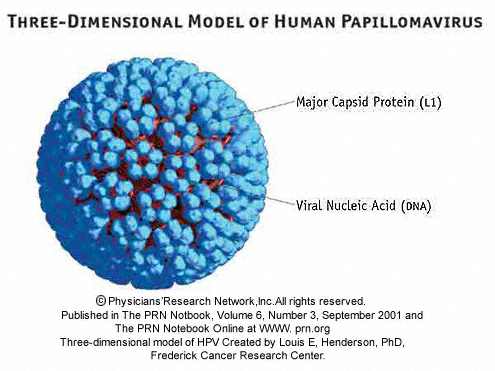is hpv a virus or bacteria)