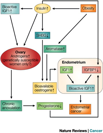 Endometrial cancer pten
