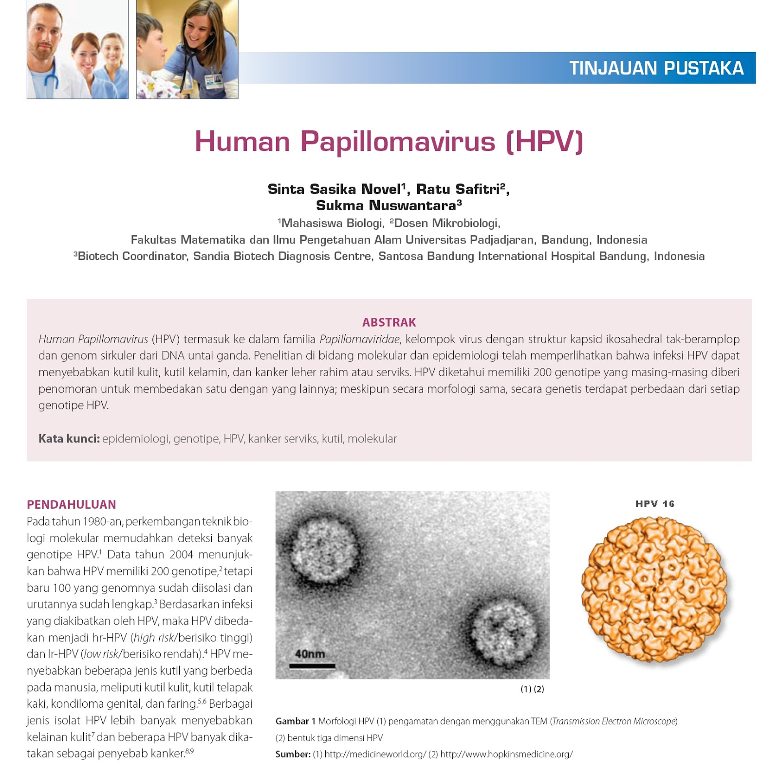 hpv dna high risk adalah)