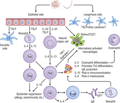helminth infections and host immune regulation)