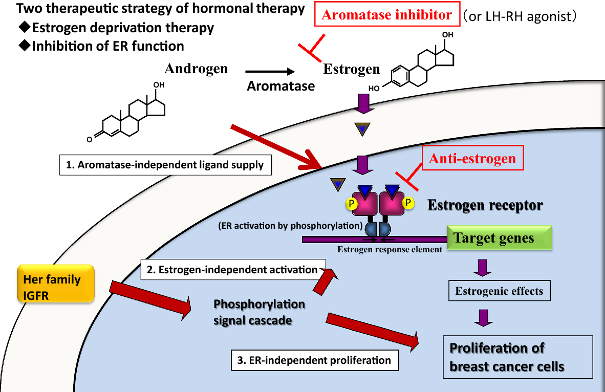 cancer on hormonal therapy