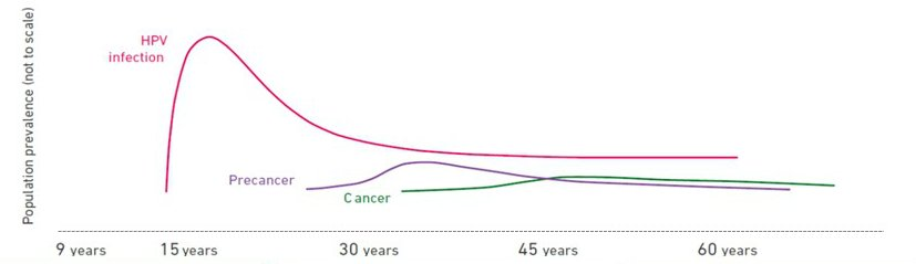 hpv cancer frequency