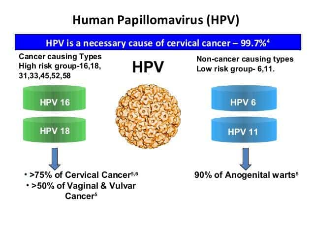 hpv high risk cancer cells)