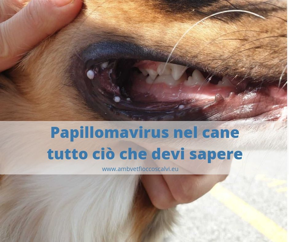 papilloma virus gatto)