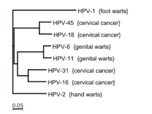 does hpv type 16 18 cause warts)