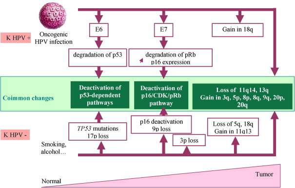 Hpv associated with head and neck cancer,