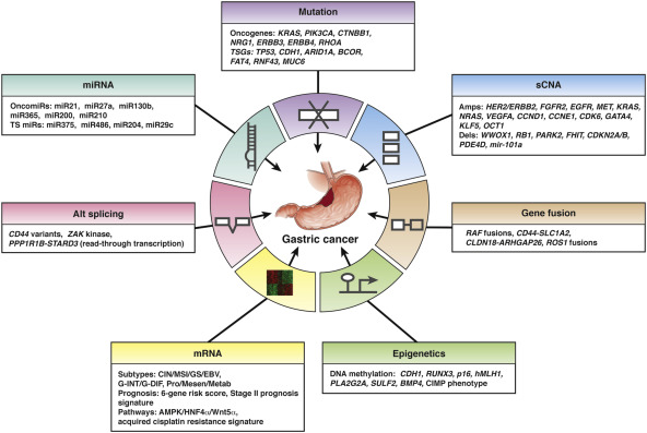 Gastric cancer pathophysiology, Principles and Practice of Gastrointestinal Oncology - malaimare.ro