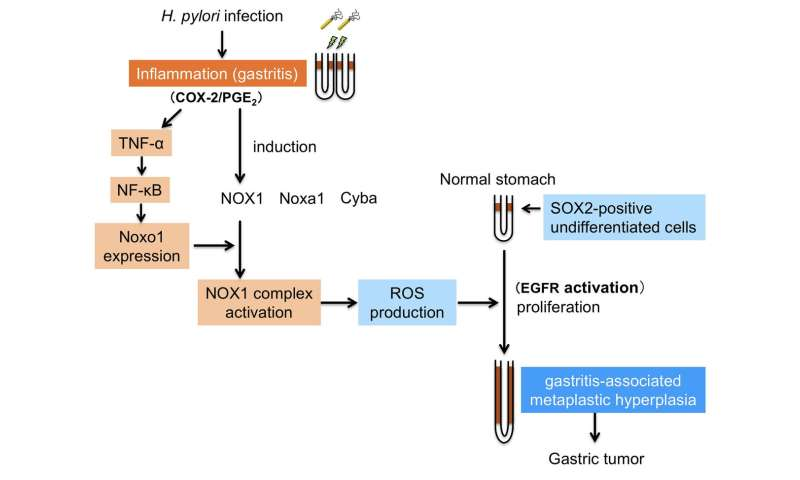 Gastric cancer of causes,