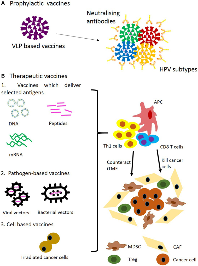 hpv and squamous cell)