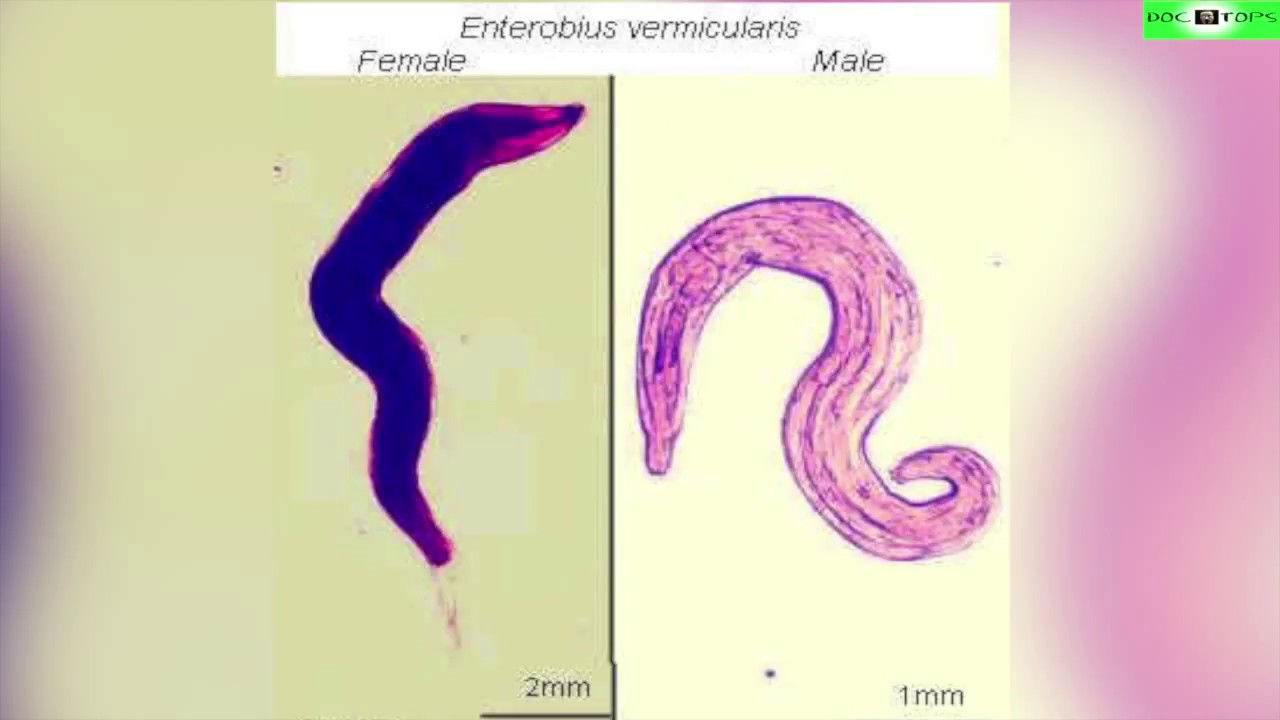 enterobius vermicularis traitement)