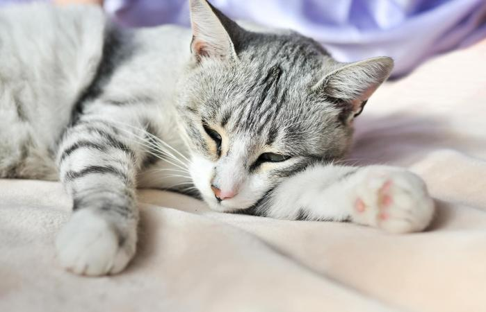 cancer de colon gatos anthelmintic meaning in medical terms