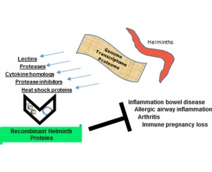 Helminthic therapy treatment