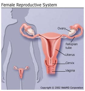 endometrial cancer and pregnancy