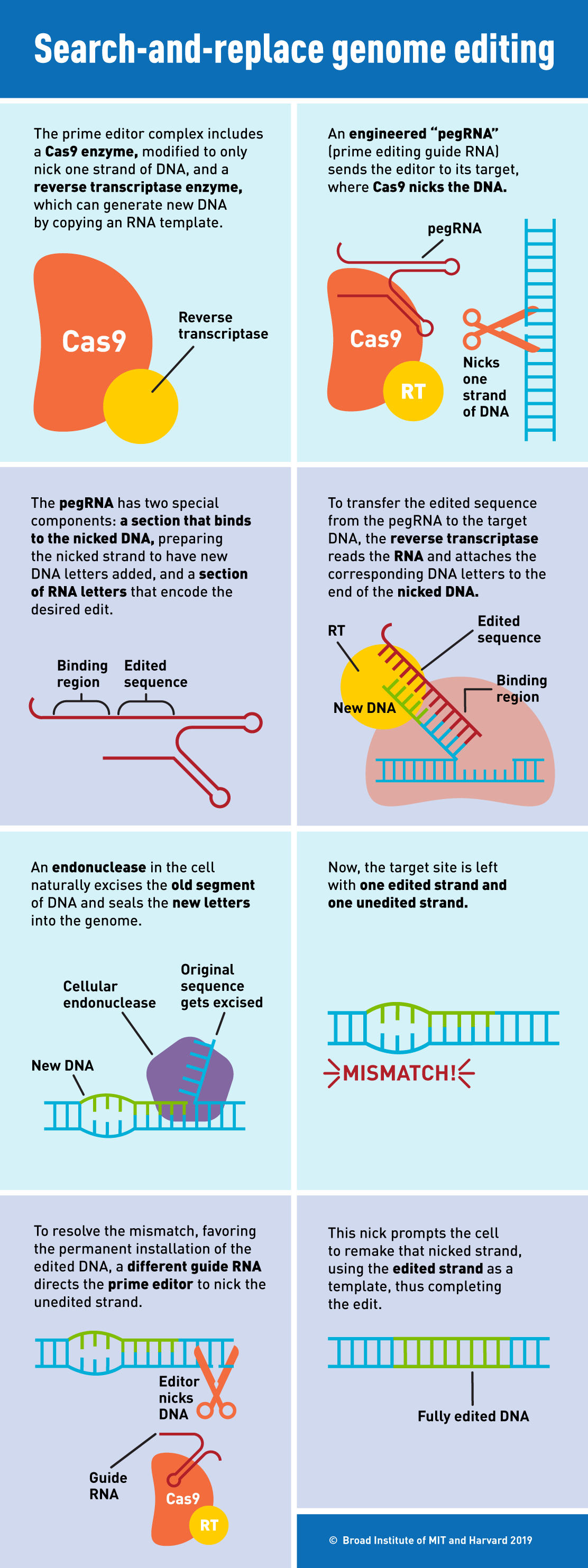 cancer and genetic defects are examples of