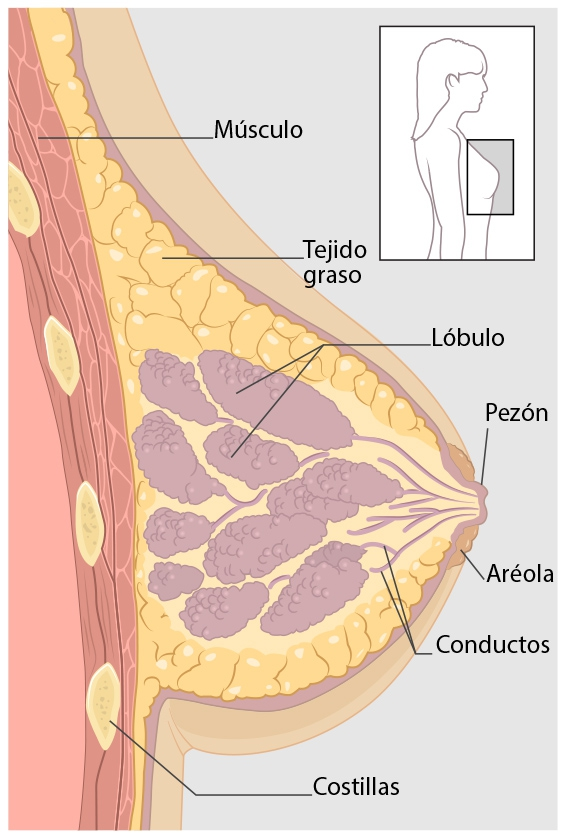 que es el cancer ingles laryngeal papillomatosis cancer