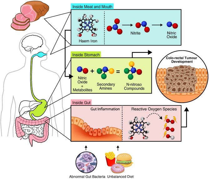 colorectal cancer red meat)