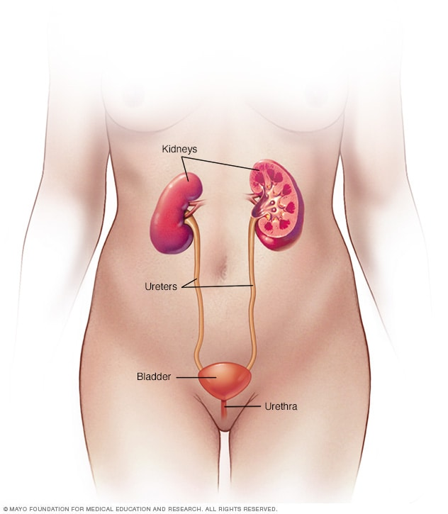 can hpv cause bladder cancer)