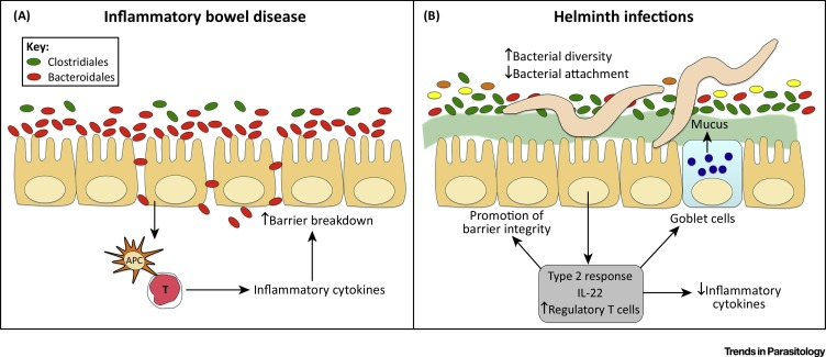helminth infection repair